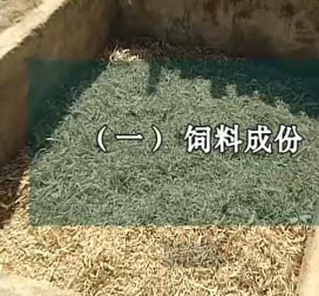 秸秆生物发酵饲料养牛技术